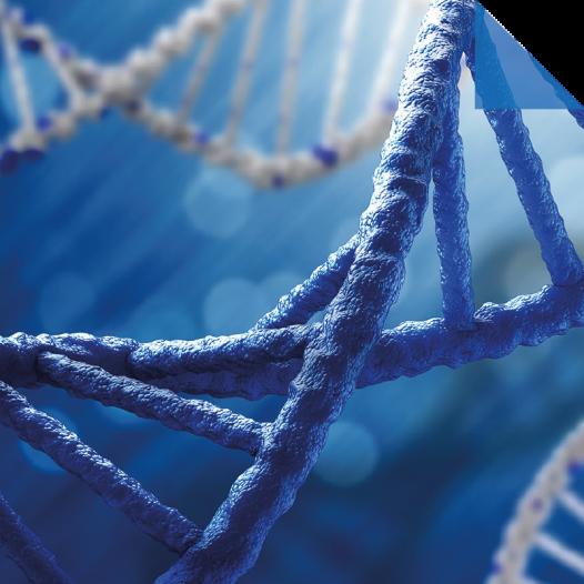 Magister en Ciencias mención Genética